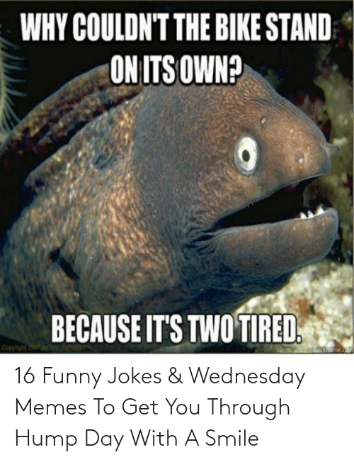 Funny, Funny Jokes, and Hump Day: 16 Funny Jokes & Wednesday Memes To Get You Through Hump Day With A Smile