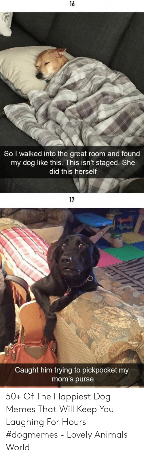 purse: 16  So I walked into the great room and found  my dog like this. This isn't staged. She  did this herself  17  Caught him trying to pickpocket my  mom's purse 50+ Of The Happiest Dog Memes That Will Keep You Laughing For Hours #dogmemes - Lovely Animals World