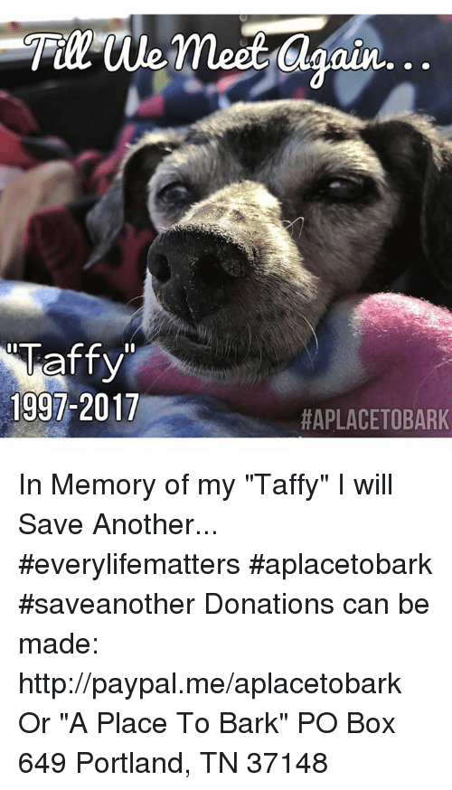 "Memes, Http, and Paypal: 1997-2017  Oun...  HAPLACETOBARK In Memory of my ""Taffy"" I will Save Another...  #everylifematters #aplacetobark #saveanother    Donations can be made:  http://paypal.me/aplacetobark Or  ""A Place To Bark"" PO Box 649 Portland, TN 37148"