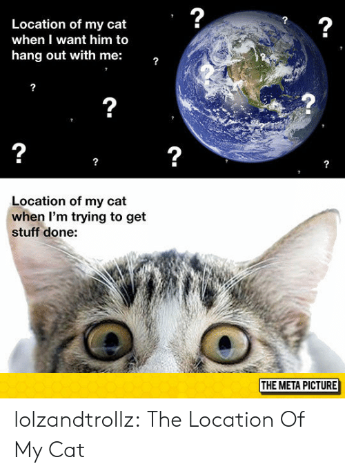 Tumblr, Blog, and Stuff: 2  2  Location of my cat  when I want him to  hang out with me:  2  2  2  Location of my cat  when I'm trying to get  stuff done:  THE META PICTURE lolzandtrollz:  The Location Of My Cat