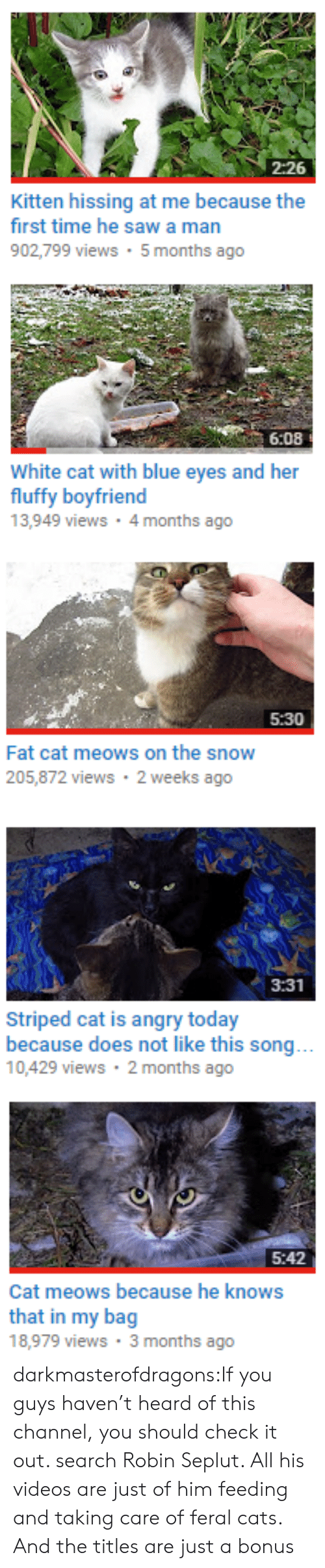 Meows: 2:26  Kitten hissing at me because the  first time he sawa man  902,799 views 5 months ago   6:08  White cat with blue eyes and her  fluffy boyfriend  13,949 views 4 months ago   5:30  Fat cat meows on the snow  205,872 views 2 weeks ago   3:31  Striped cat is angry today  because does not like this song...  10,429 views 2 months ago   5:42  Cat meows because he knows  that in my bag  18,979 views 3 months ago darkmasterofdragons:If you guys haven't heard of this channel, you should check it out. search Robin Seplut. All his videos are just of him feeding and taking care of feral cats. And the titles are just a bonus