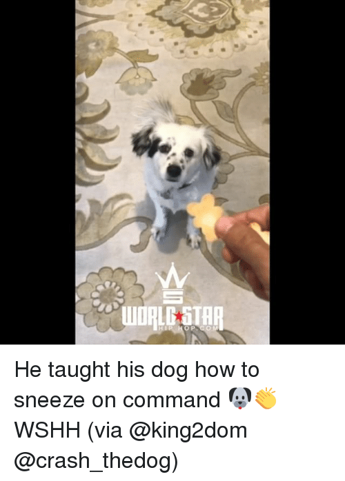 how to make a dog sneeze