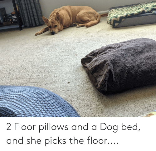 pillows: 2 Floor pillows and a Dog bed, and she picks the floor....