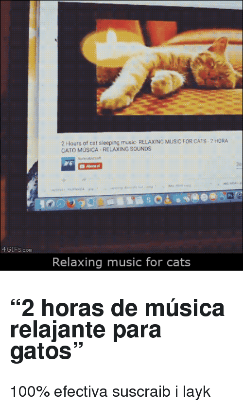 """Cato: 2 Hours of cat sieeping music RELAXING MUSIC FOR CATS 2 HORA  CATO MÜSICA RELAXING SOUNDS  4GIFs.com  Relaxing music for cats <h2>""""2 horas de música relajante para gatos""""</h2><p>100% efectiva suscraib i layk</p>"""