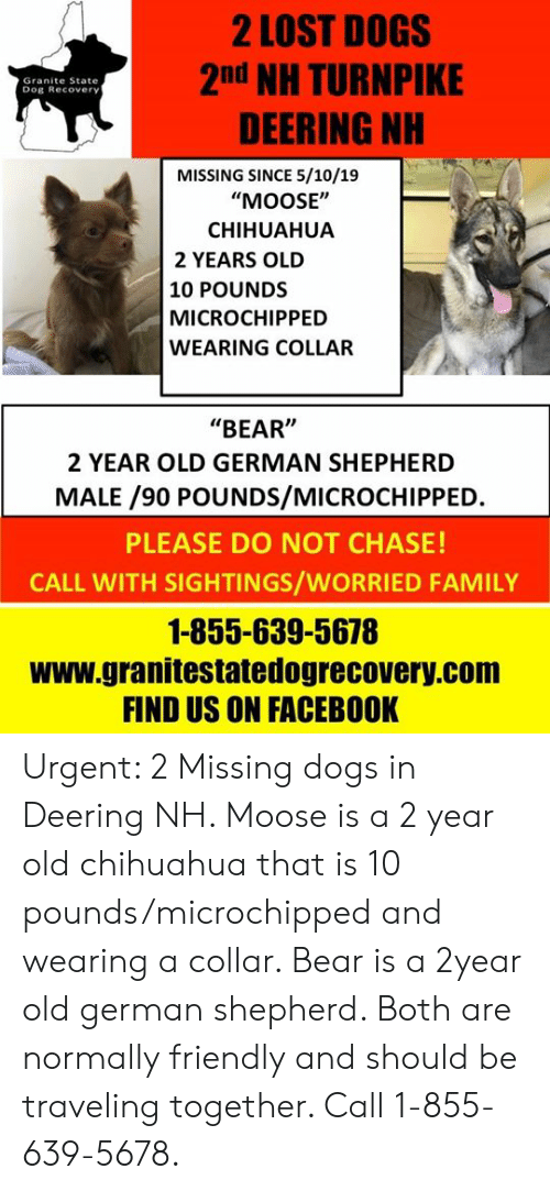 """Chihuahua, Dogs, and Facebook: 2 LOST DOGS  2nd NH TURNPIKE  DEERING NH  Granite State  Dog Recovery  MISSING SINCE 5/10/19  """"MOOSE""""  CHIHUAHUA  2 YEARS OLD  10 POUNDS  MICROCHIPPED  WEARING COLLAR  """"BEAR""""  2 YEAR OLD GERMAN SHEPHERD  MALE /90 POUNDS/MICROCHIPPED  PLEASE DO NOT CHASE!  CALL WITH SIGHTINGS/WORRIED FAMILY  1-855-639-5678  www.granitestatedogrecovery.com  FIND US ON FACEBOOK Urgent: 2 Missing dogs in Deering NH. Moose is a 2 year old chihuahua that is 10 pounds/microchipped and wearing a collar. Bear is a 2year old german shepherd.  Both are normally friendly and should be traveling together.  Call 1-855-639-5678."""