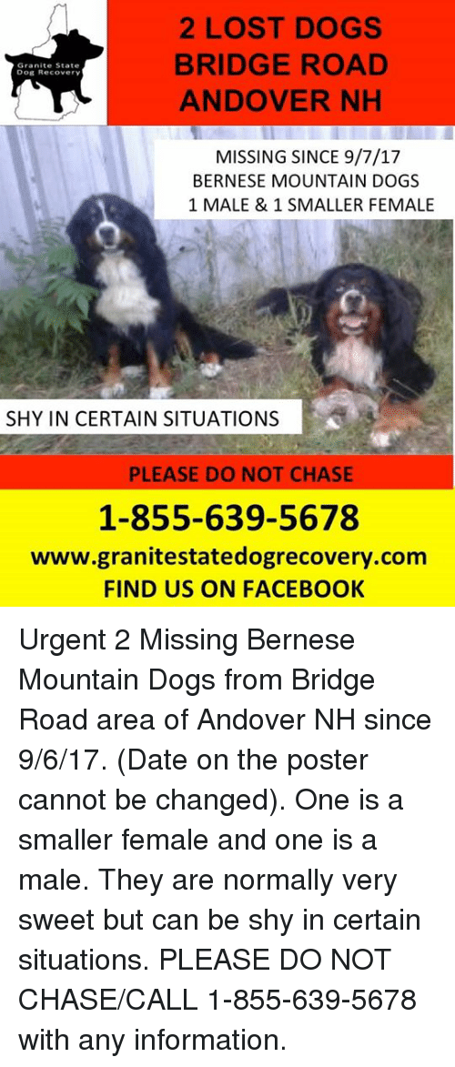 posterization: 2 LOST DOGS  BRIDGE ROAD  ANDOVER NHH  Granite State  Dog Recovery  MISSING SINCE 9/7/17  BERNESE MOUNTAIN DOGS  1 MALE & 1 SMALLER FEMALE  SHY IN CERTAIN SITUATIONS  PLEASE DO NOT CHASE  1-855-639-5678  www.granitestatedogrecovery.com  FIND US ON FACEBOOK Urgent 2 Missing Bernese Mountain Dogs from Bridge Road area of Andover NH since 9/6/17.  (Date on the poster cannot be changed). One is a smaller female and one is a male.  They are normally very sweet but can be shy in certain situations.  PLEASE DO NOT CHASE/CALL 1-855-639-5678 with any information.