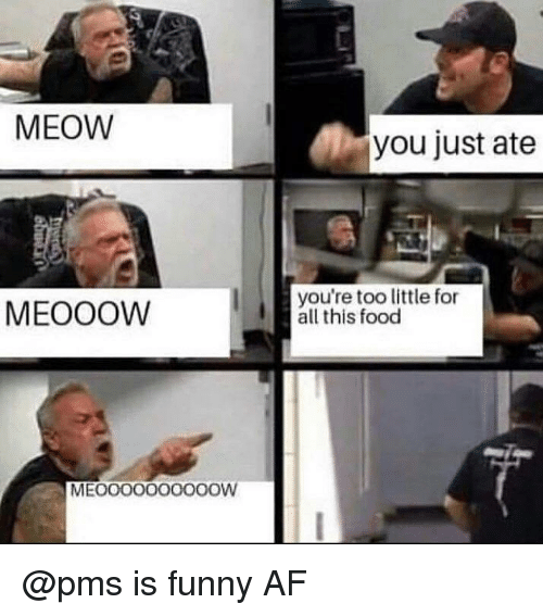 Af, Food, and Funny: 2  MEOW  you just ate  MEOOOW  you're too little for  all this food  MEOOOO000OOOW @pms is funny AF