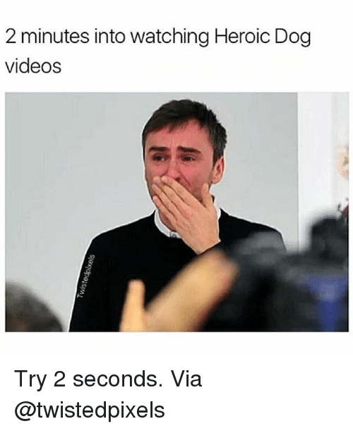 Memes, Videos, and 🤖: 2 minutes into watching Heroic Dog  videos Try 2 seconds. Via @twistedpixels