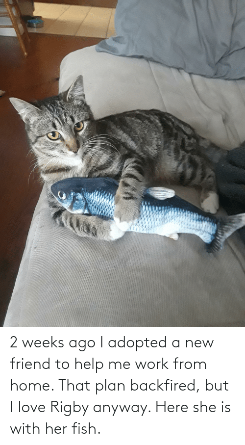 rigby: 2 weeks ago I adopted a new friend to help me work from home. That plan backfired, but I love Rigby anyway. Here she is with her fish.