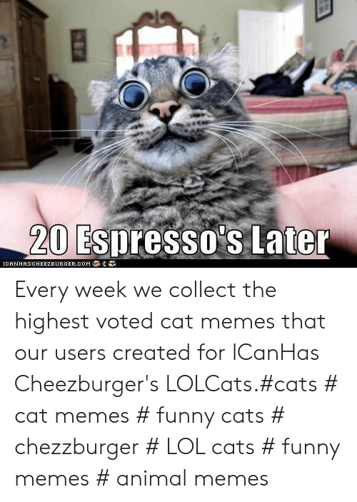 Cat Memes Funny: 20 Espresso's Later  IGAN HAS CHEEZBURGER,00M Every week we collect the highest voted cat memes that our users created for ICanHas Cheezburger's LOLCats.#cats # cat memes # funny cats # chezzburger # LOL cats # funny memes # animal memes