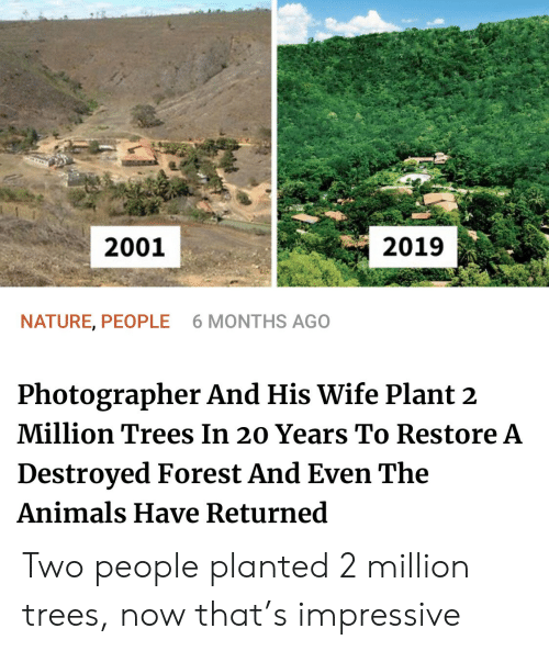 20 Years: 2001  2019  NATURE, PEOPLE  6 MONTHS AGO  Photographer And His Wife Plant 2  Million Trees In 20 Years To Restore A  Destroyed Forest And Even The  Animals Have Returned Two people planted 2 million trees, now that's impressive