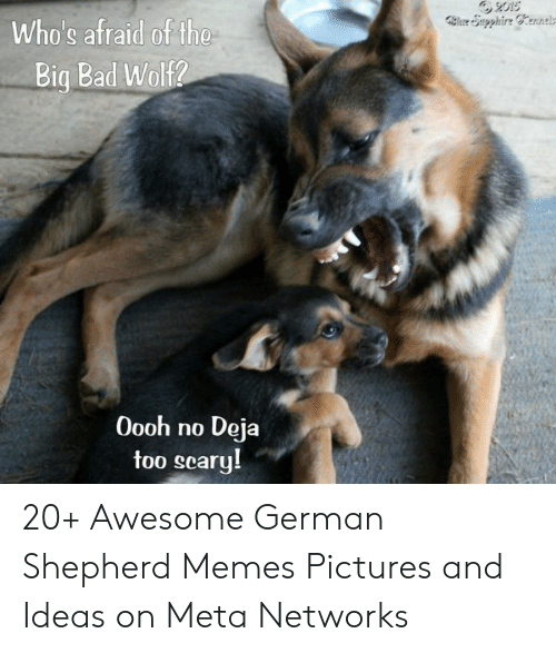 Bad, Memes, and German Shepherd: 2015  le Supphire Cerne  Who's afraid of the  Big Bad Wolf2  O0oh no  Deja  too seary! 20+ Awesome German Shepherd Memes Pictures and Ideas on Meta Networks