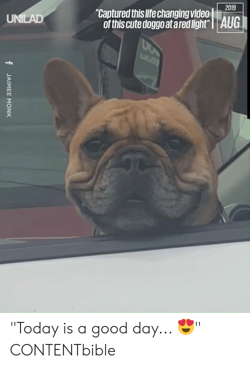 "Today Is A Good Day: 2019  ""Captured this life changing video  of this cute doggo at ared light"" 