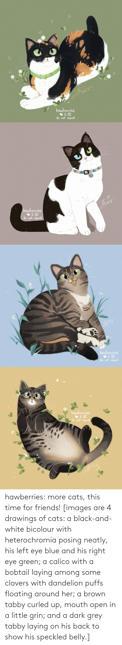 mouth: 2019  hawberries  do not repost   hawberries  do not repost   hawberries  do not repost   hawberries  do not repost hawberries: more cats, this time for friends! [images are 4 drawings of cats: a black-and-white bicolour with heterochromia posing neatly, his left eye blue and his right eye green; a calico with a bobtail laying among some clovers with dandelion puffs floating around her; a brown tabby curled up, mouth open in a little grin; and a dark grey tabby laying on his back to show his speckled belly.]
