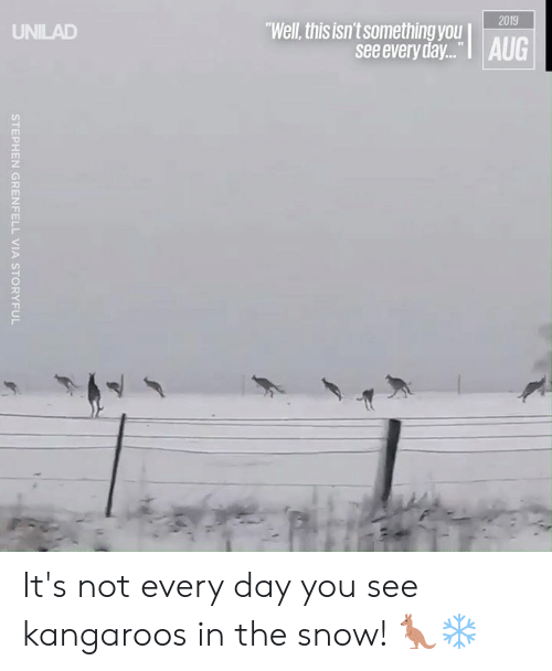 "Dank, Stephen, and Snow: 2019  ""Well, this isn't something you AUG  UNILAD  see every day...  STEPHEN GRENFELL VIA STORYFUL It's not every day you see kangaroos in the snow! 🦘❄"