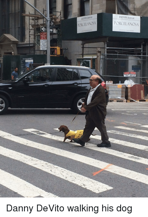 Avenue: 202 Fifth Avenue  202 Fifth Avenue  PORCELANOSA  PORCELANOSA  ON Danny DeVito walking his dog