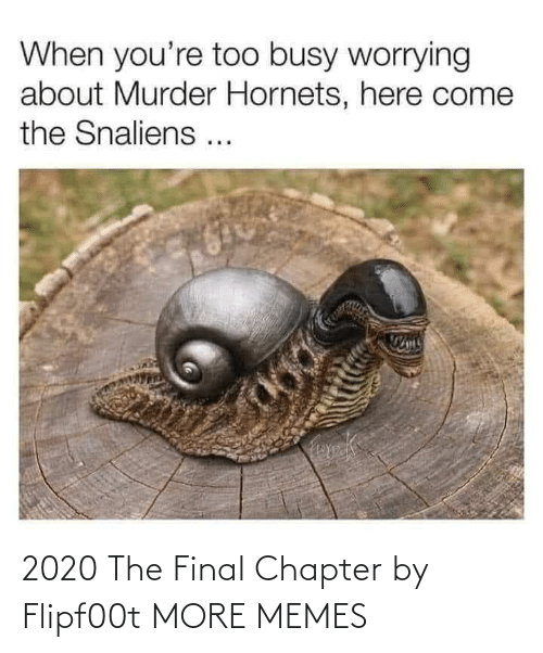 final: 2020 The Final Chapter by Flipf00t MORE MEMES