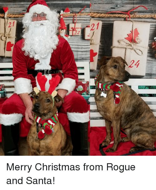 Christmas, Merry Christmas, and Rogue: 21  21  24 Merry Christmas from Rogue and Santa!