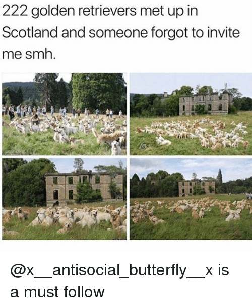 Funny, Smh, and Butterfly: 222 golden retrievers met up in  Scotland and someone forgot to invite  me smh. @x__antisocial_butterfly__x is a must follow