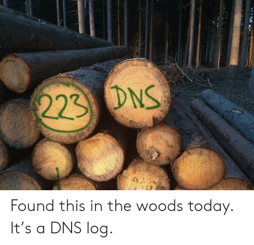 in the woods: 223 DNS Found this in the woods today. It's a DNS log.
