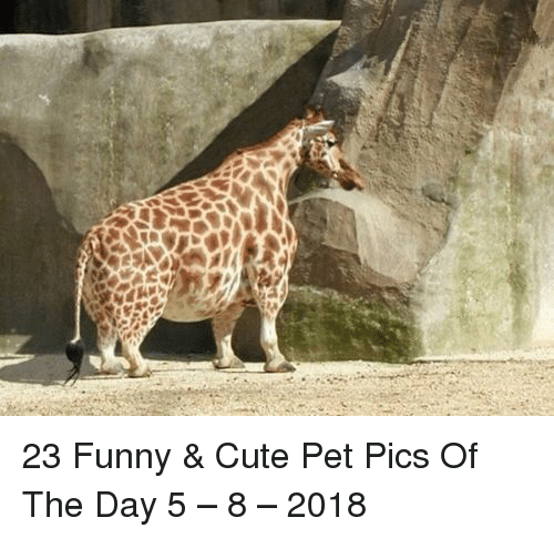 Cute, Funny, and Pet: 23 Funny & Cute Pet Pics Of The Day 5 – 8 – 2018