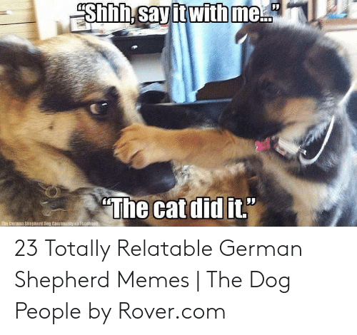 Memes, German Shepherd, and Relatable: 23 Totally Relatable German Shepherd Memes | The Dog People by Rover.com