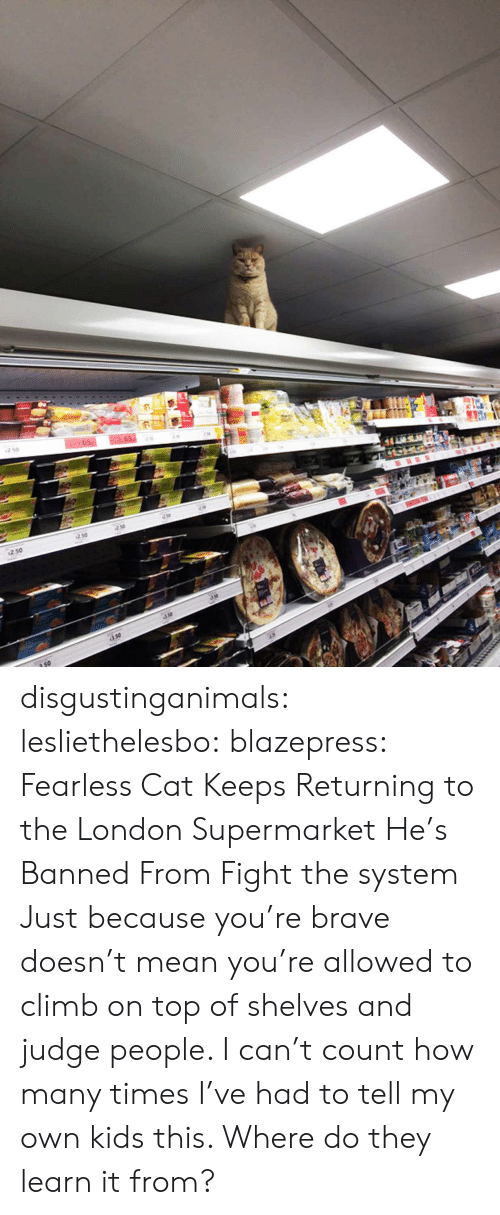 How Many Times, Target, and Tumblr: 250  so disgustinganimals:  lesliethelesbo:  blazepress:  Fearless Cat Keeps Returning to the London Supermarket He's Banned From  Fight the system  Just because you're brave doesn't mean you're allowed to climb on top of shelves and judge people. I can't count how many times I've had to tell my own kids this. Where do they learn it from?
