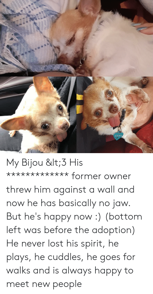 Lost, Happy, and Spirit: 2590英5 My Bijou <3 His ************* former owner threw him against a wall and now he has basically no jaw. But he's happy now :) (bottom left was before the adoption) He never lost his spirit, he plays, he cuddles, he goes for walks and is always happy to meet new people