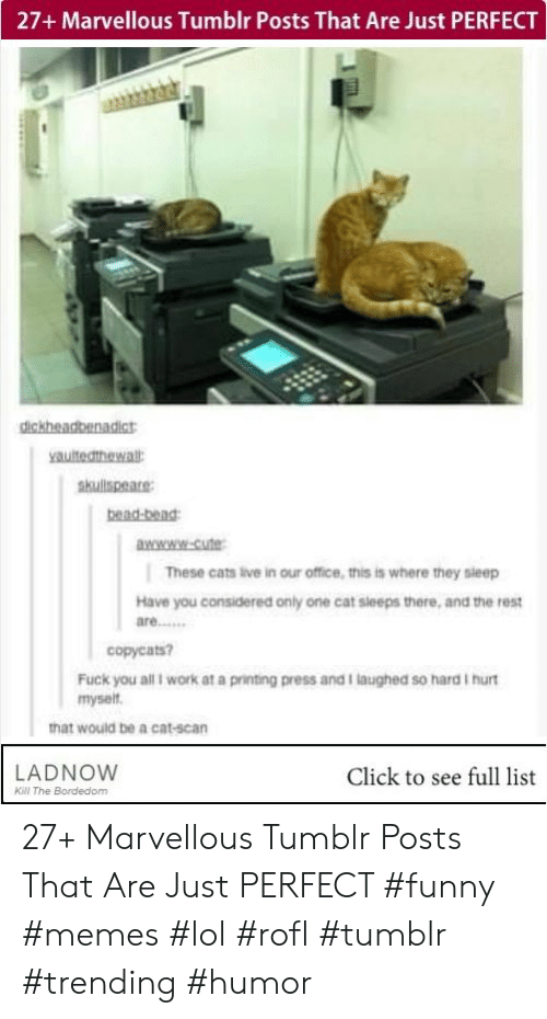 Cats, Click, and Cute: 27+ Marvellous Tumblr Posts That Are Just PERFECT  yauitedthewa  skullspeare  bead-bead  wwww-Cute  These cats live in our office, this is where they sleep  Have you considered only one cat sleeps there, and the rest  are……  copyeats?  Fuck you all i work at a printing press and I laughed so hard I hurt  myselt  hat would be a cat-scan  LADNOVW  Click to see full list  Kill The Bordedom 27+ Marvellous Tumblr Posts That Are Just PERFECT #funny #memes #lol #rofl #tumblr #trending #humor