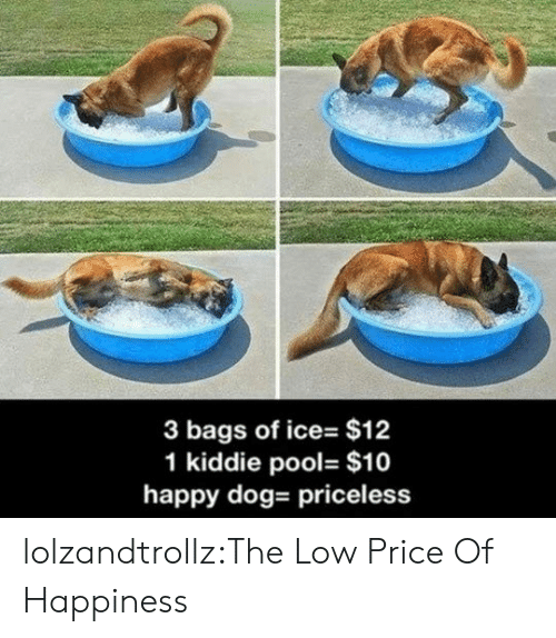 Tumblr, Blog, and Happy: 3 bags of ice- $12  1 kiddie pool- $10  happy dog- priceless lolzandtrollz:The Low Price Of Happiness
