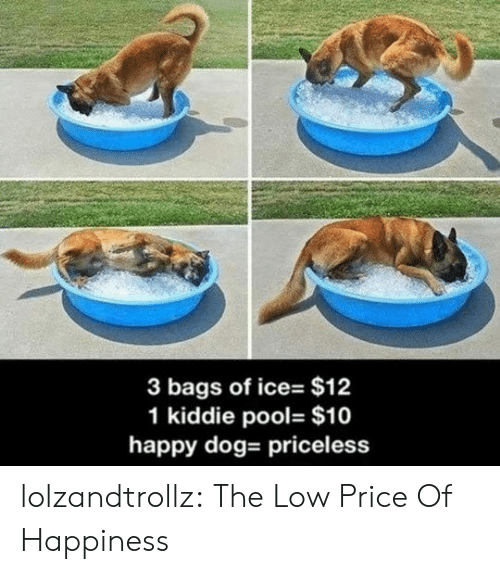 Kiddie: 3 bags of ice- $12  1 kiddie pool- $10  happy dog- priceless lolzandtrollz:  The Low Price Of Happiness