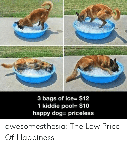 Kiddie: 3 bags of ice- $12  1 kiddie pool- $10  happy dog- priceless awesomesthesia:  The Low Price Of Happiness