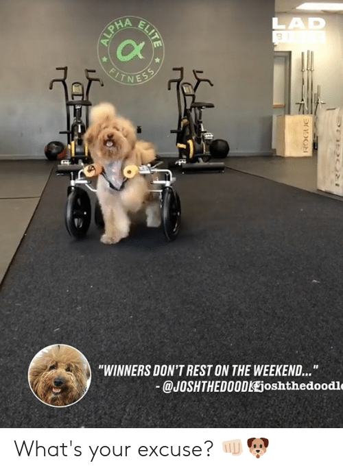 "Winners: 3  Cx  -1  ""WINNERS DON'T REST ON THE WEEKEND...  @JOSHTHEDO0DlEjoshthedoodle What's your excuse? 👊🏻🐶"