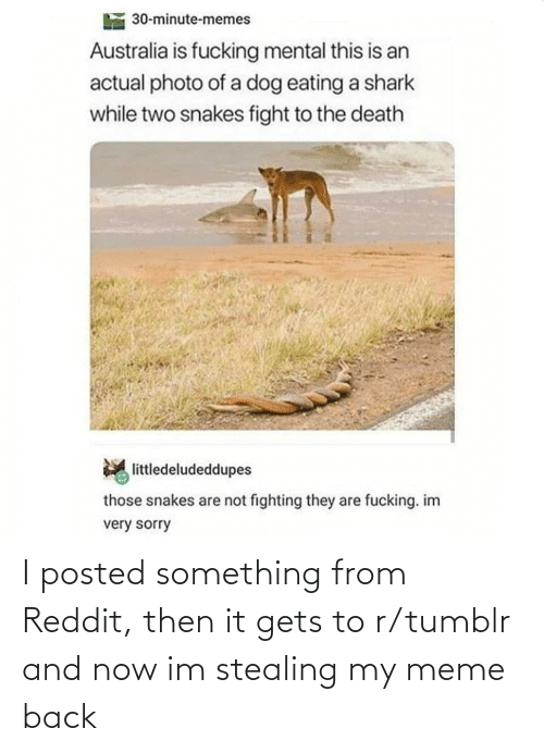 eating: 30-minute-memes  Australia is fucking mental this is an  actual photo of a dog eating a shark  while two snakes fight to the death  littledeludeddupes  those snakes are not fighting they are fucking. im  very sorry I posted something from Reddit, then it gets to r/tumblr and now im stealing my meme back