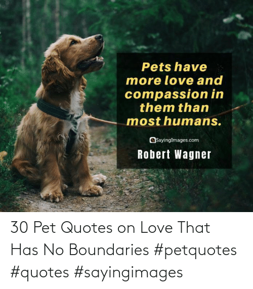 pet: 30 Pet Quotes on Love That Has No Boundaries #petquotes #quotes #sayingimages