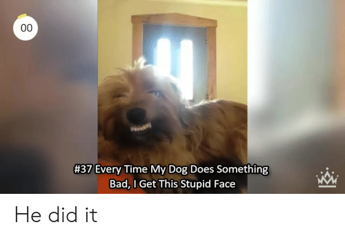 Bad, Time, and Dog:  #37 Every Time My Dog Does Something  Bad, l Get This Stupid Face He did it