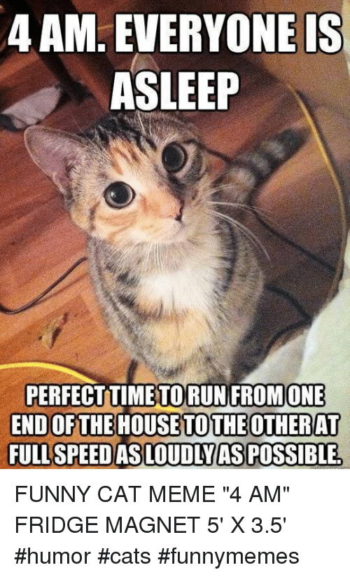 "cat meme: 4 AM. EVERYONEIS  ASLEEP  PERFECTTIMETORUN FROMONE  END OFTHE HOUSETOTHEOTHERAT  FULL SPEEDAS LOUDIYASPOSSIBLE FUNNY CAT MEME ""4 AM"" FRIDGE MAGNET 5' X 3.5' #humor #cats #funnymemes"