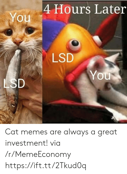 Memes, Lsd, and Cat: 4 Hours Later  You  LSD  You  LSD Cat memes are always a great investment! via /r/MemeEconomy https://ift.tt/2Tkud0q