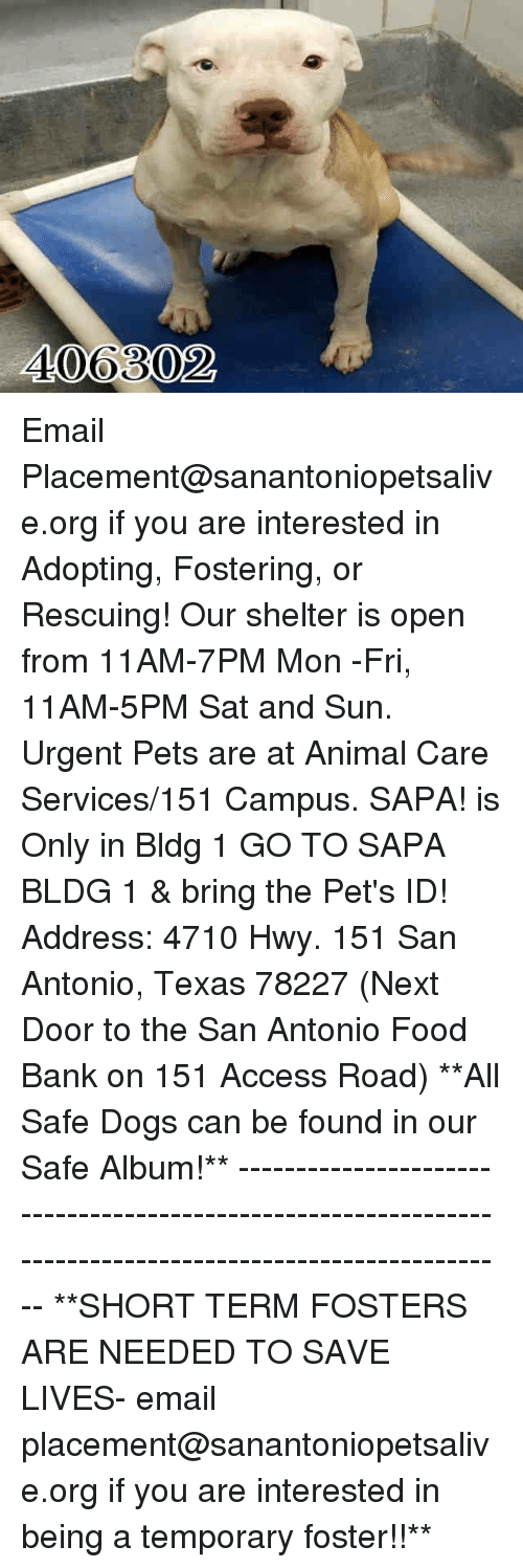 Dogs, Food, and Memes: 406302 Email Placement@sanantoniopetsalive.org if you are interested in Adopting, Fostering, or Rescuing!  Our shelter is open from 11AM-7PM Mon -Fri, 11AM-5PM Sat and Sun.  Urgent Pets are at Animal Care Services/151 Campus. SAPA! is Only in Bldg 1 GO TO SAPA BLDG 1 & bring the Pet's ID! Address: 4710 Hwy. 151 San Antonio, Texas 78227 (Next Door to the San Antonio Food Bank on 151 Access Road)  **All Safe Dogs can be found in our Safe Album!** ---------------------------------------------------------------------------------------------------------- **SHORT TERM FOSTERS ARE NEEDED TO SAVE LIVES- email placement@sanantoniopetsalive.org if you are interested in being a temporary foster!!**
