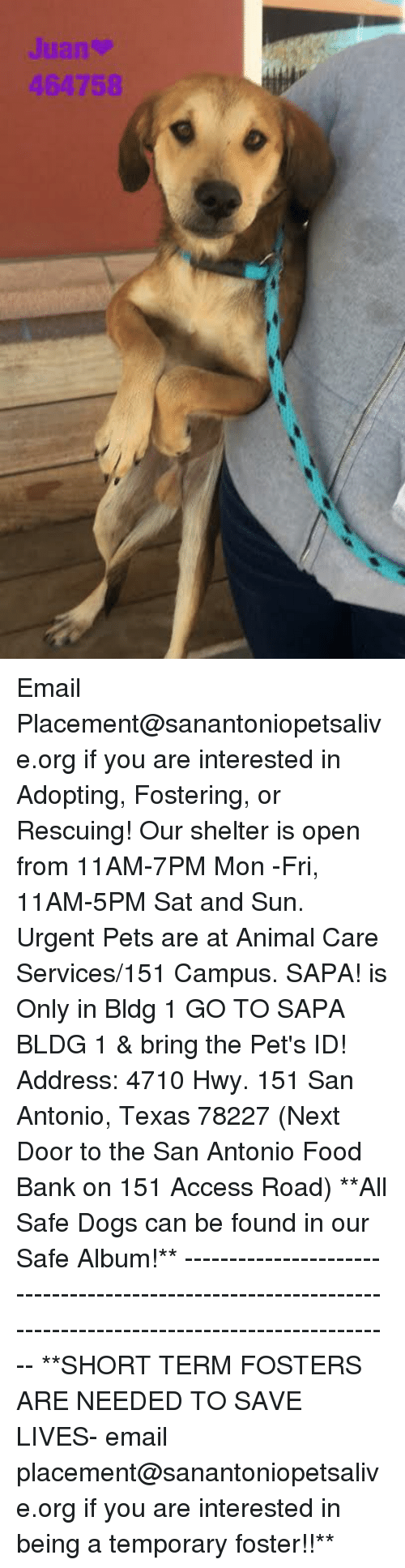 Dogs, Food, and Memes: 464758 Email Placement@sanantoniopetsalive.org if you are interested in Adopting, Fostering, or Rescuing!  Our shelter is open from 11AM-7PM Mon -Fri, 11AM-5PM Sat and Sun.  Urgent Pets are at Animal Care Services/151 Campus. SAPA! is Only in Bldg 1 GO TO SAPA BLDG 1 & bring the Pet's ID! Address: 4710 Hwy. 151 San Antonio, Texas 78227 (Next Door to the San Antonio Food Bank on 151 Access Road)  **All Safe Dogs can be found in our Safe Album!** ---------------------------------------------------------------------------------------------------------- **SHORT TERM FOSTERS ARE NEEDED TO SAVE LIVES- email placement@sanantoniopetsalive.org if you are interested in being a temporary foster!!**