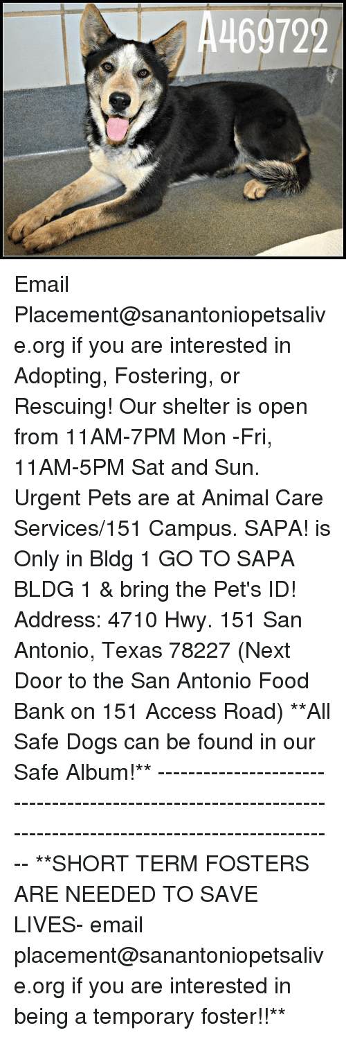 Dogs, Food, and Memes: 469722 Email Placement@sanantoniopetsalive.org if you are interested in Adopting, Fostering, or Rescuing!  Our shelter is open from 11AM-7PM Mon -Fri, 11AM-5PM Sat and Sun.  Urgent Pets are at Animal Care Services/151 Campus. SAPA! is Only in Bldg 1 GO TO SAPA BLDG 1 & bring the Pet's ID! Address: 4710 Hwy. 151 San Antonio, Texas 78227 (Next Door to the San Antonio Food Bank on 151 Access Road)  **All Safe Dogs can be found in our Safe Album!** ---------------------------------------------------------------------------------------------------------- **SHORT TERM FOSTERS ARE NEEDED TO SAVE LIVES- email placement@sanantoniopetsalive.org if you are interested in being a temporary foster!!**