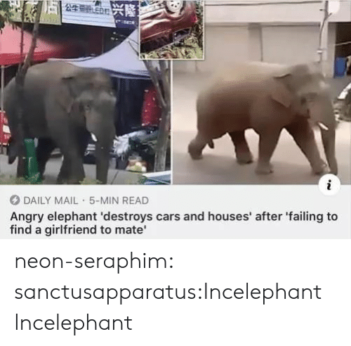 failing: 5公生号n兴隆之  i  DAILY MAIL 5-MIN READ  Angry elephant 'destroys cars and houses' after 'failing to  find a girlfriend to mate neon-seraphim:  sanctusapparatus:Incelephant  Incelephant