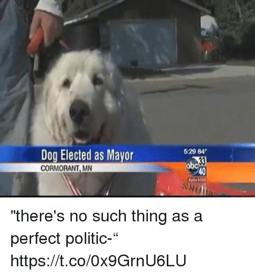 """Politic: 5:29 84  Dog Elected as Mavor  CORMORANT, MN  40 """"there's no such thing as a perfect politic-"""" https://t.co/0x9GrnU6LU"""