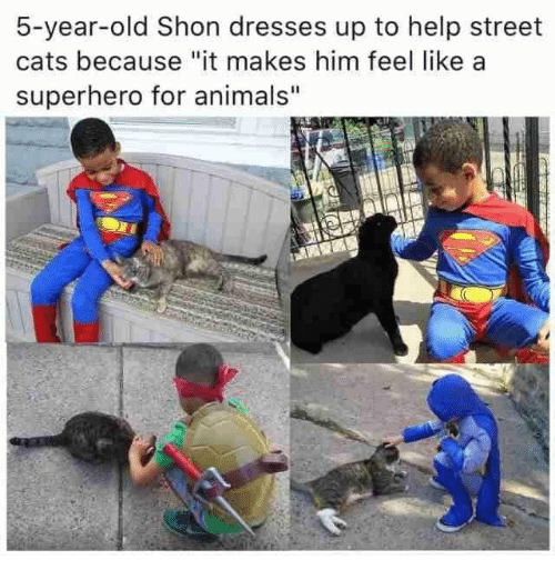 """Animals, Cats, and Superhero: 5-year-old Shon dresses up to help street  cats because """"it makes him feel like a  superhero for animals"""""""