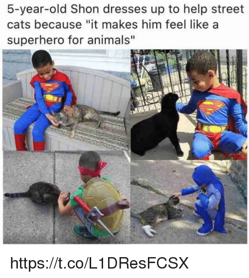 """Animals, Cats, and Memes: 5-year-old Shon dresses up to help street  cats because """"it makes him feel like a  superhero for animals"""" https://t.co/L1DResFCSX"""
