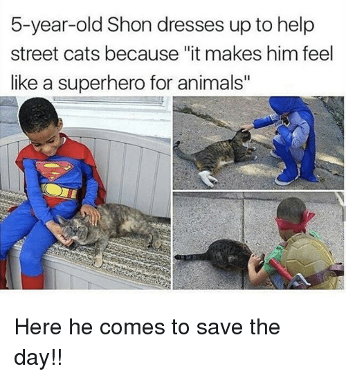 "Animals, Cats, and Superhero: 5-year-old Shon dresses up to help  street cats because ""it makes him feel  like a superhero for animals"" <p>Here he comes to save the day!!</p>"