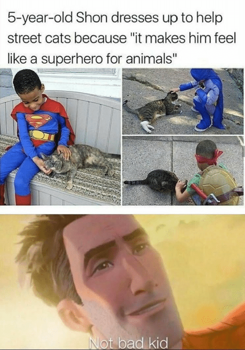 """superhero: 5-year-old Shon dresses up to help  street cats because """"it makes him feel  like a superhero for animals""""  Not bad kid"""