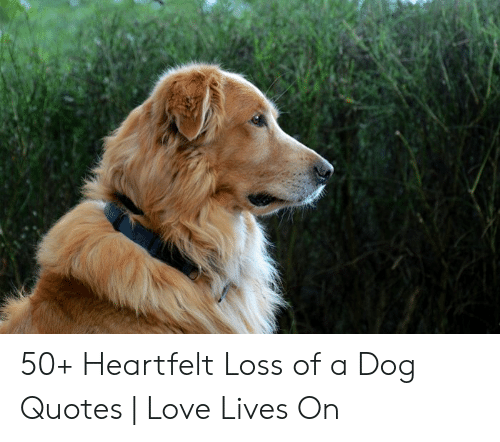 50+ Heartfelt Loss of a Dog Quotes   Love Lives on   Love ...