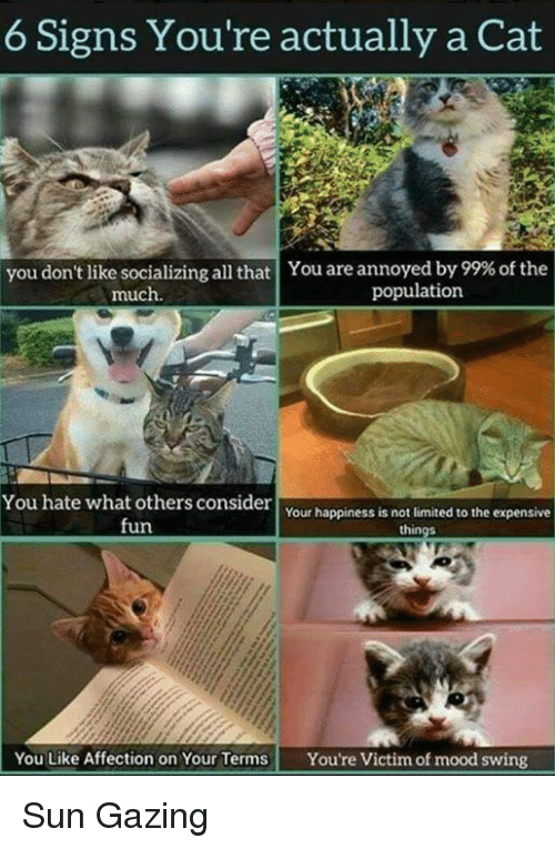 Memes, Mood, and Limited: 6 Signs You're actually a Cat  you don't like socializing all that | You are annoyed by 99% of the  much  population  You hate what others consider  fun  Your happiness is not limited to the expensive  You Like Affection on Your Terms Youre Victim of mood swing Sun Gazing