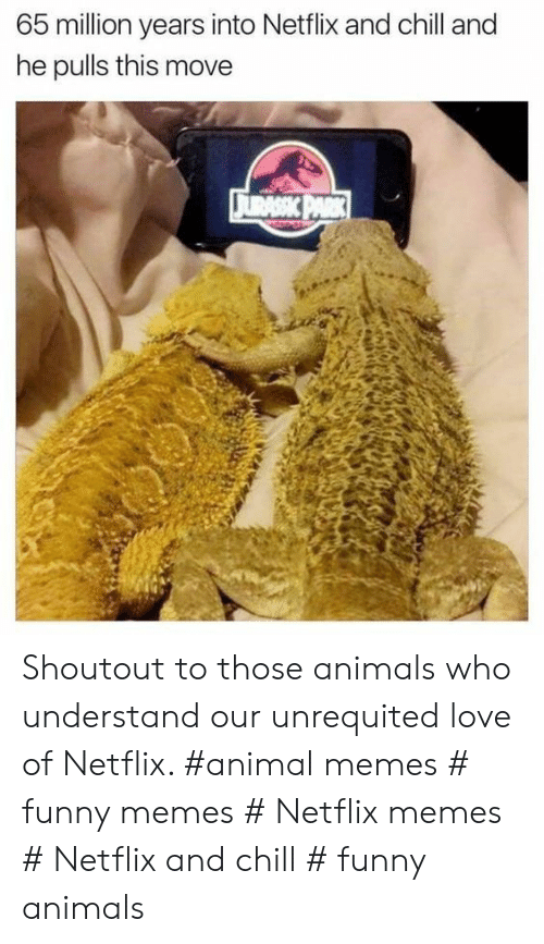 Funny animals: 65 million years into Netflix and chill and  he pulls this move Shoutout to those animals who understand our unrequited love of Netflix. #animal memes # funny memes # Netflix memes # Netflix and chill # funny animals